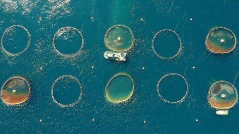 Su ürünleri üretimi azaldı