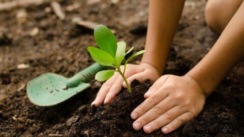 Bugün Dünya Çevre Günü: İşte en güzel Dünya Çevre Günü mesajları…