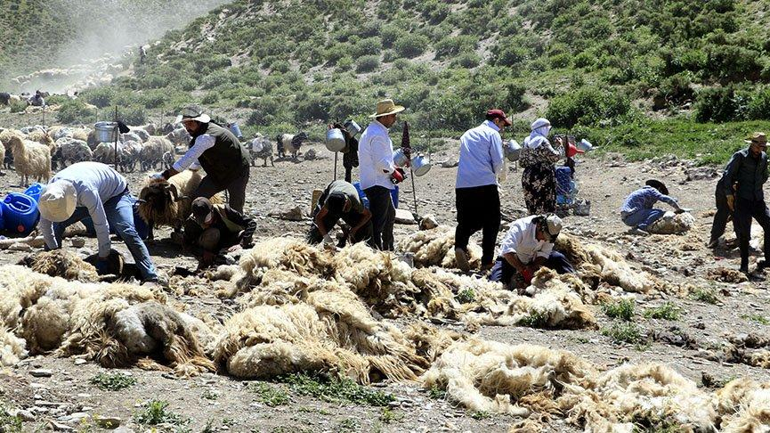 Besicilerin koyun kırkma mesaisi başladı