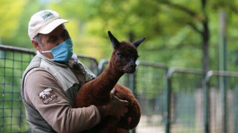Bursa Hayvanat Bahçesi'nde doğum heyecanı
