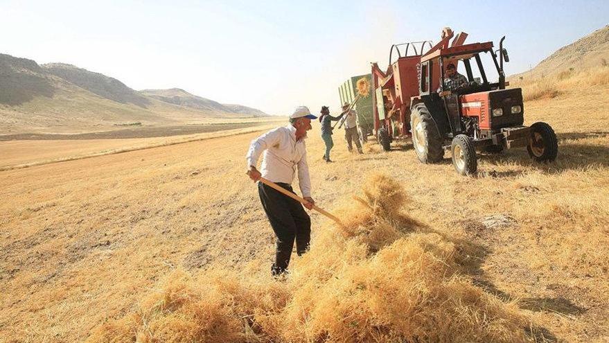 TÜİK'in buğdayı da tozpembe çıktı