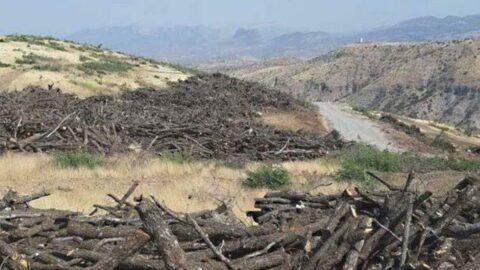 AKP'li vekilin babası 'doğa katliamı' yaptı iddiası