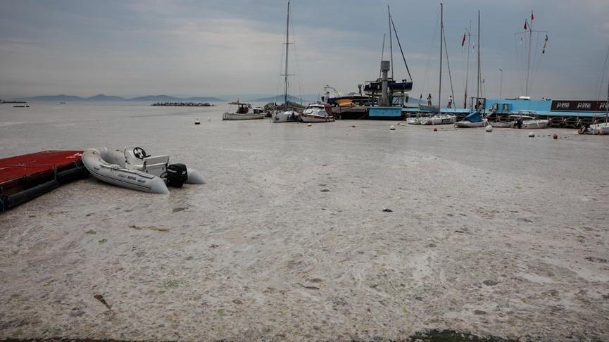 Kadıköy Kurbağlıdere ile sahilleri deniz salyası kapladı: Ekipler temizlik çalışması yaptı