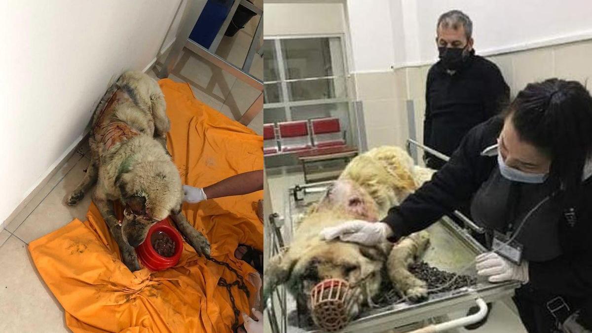 Kangal cinsi köpeği baltayla öldürdü
