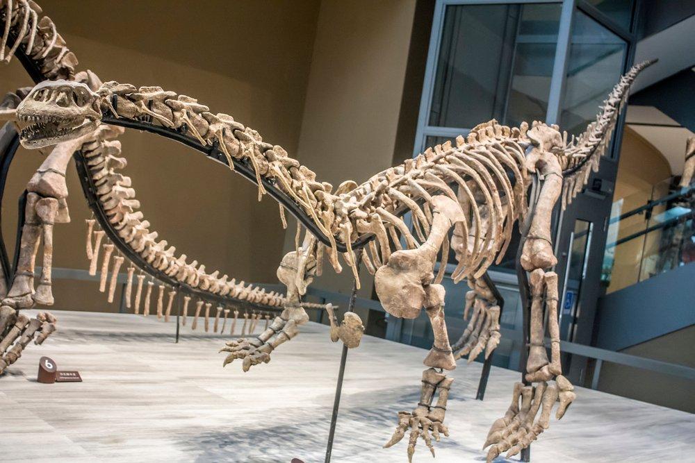 Çin'de yüzde 70'i bozulmamış dinozor iskeleti bulundu