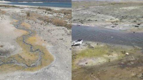 'İçilebilir denen Salda Gölü'ne kanalizasyon karışıyor'