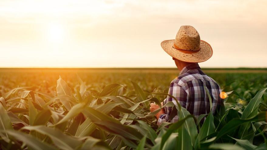 Çiftçiler toprağa geri dönmüyor