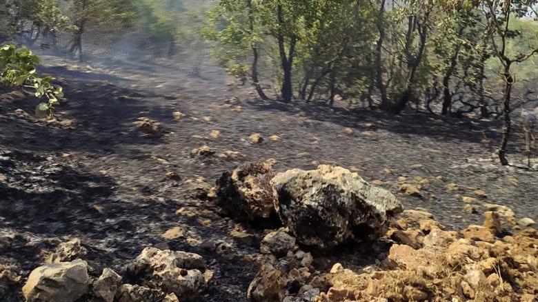 Orman yangını beşinci gününde kontrol altına alındı