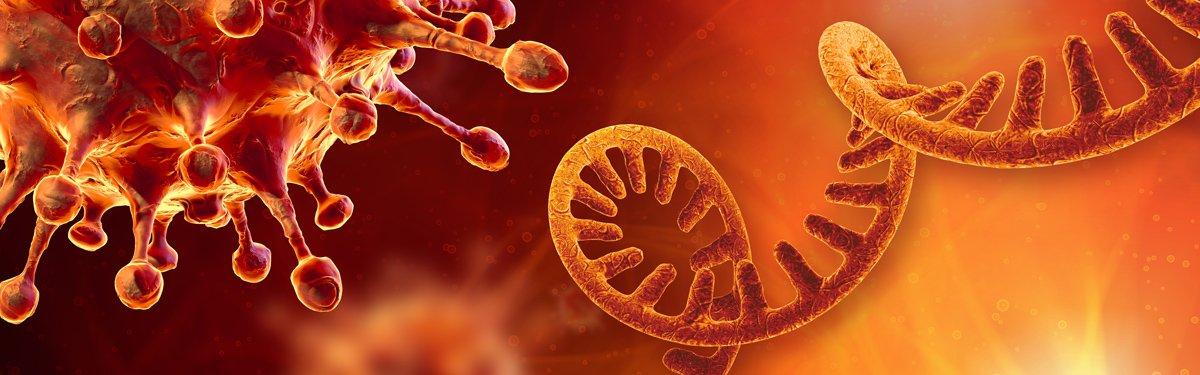 CovId-19 insan vücudunda kalıcı olabilir mi?