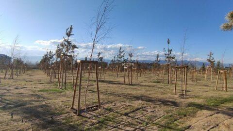 Milyonlarca liralık projede binlerce ağaç sulanmadığı için kurudu