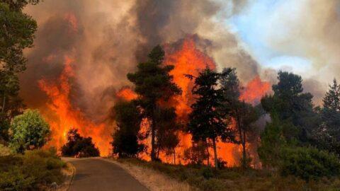 Kudüs'te çıkan yangında binlerce dönüm arazi kül oldu