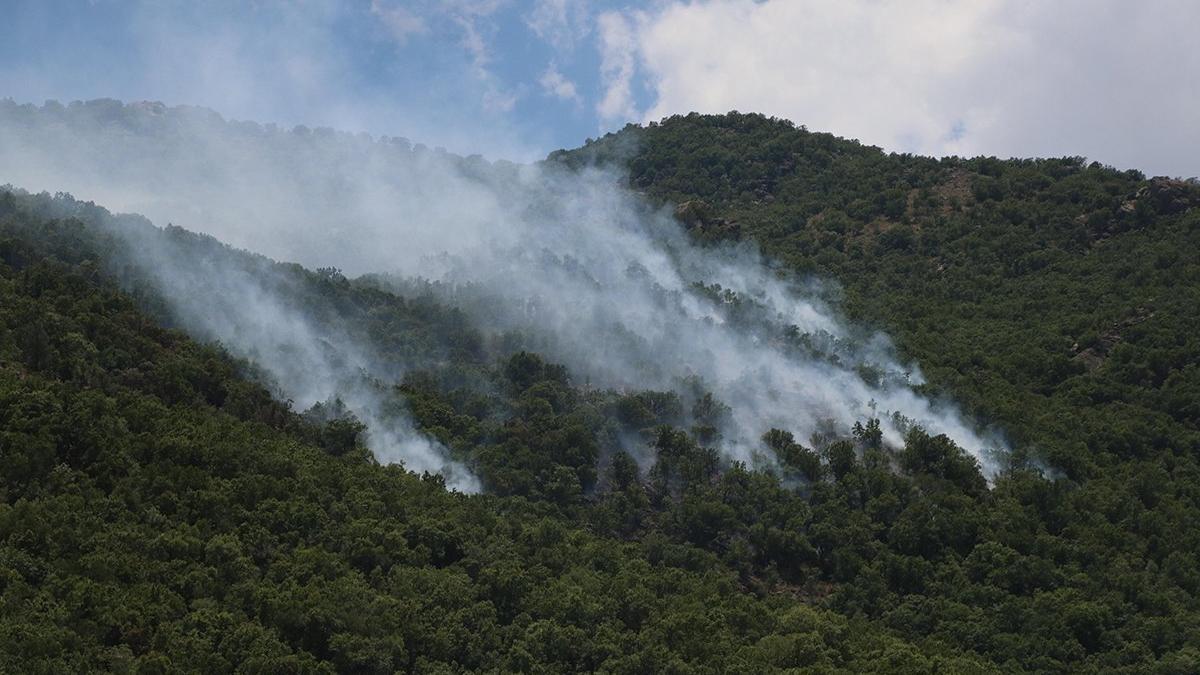 Yangın tam 5 gün sürdü! 30 hektar alan kül oldu