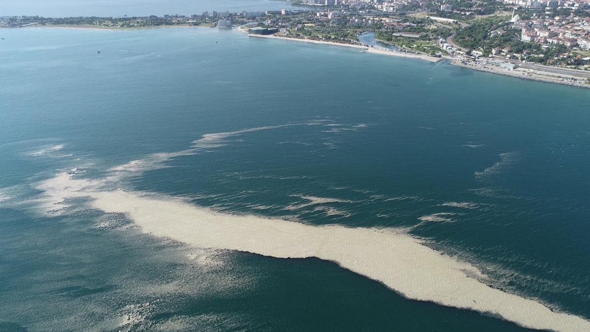 Küçükçekmece açıklarında 'müsilaj' adası