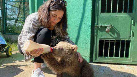 Aslıhan Gürbüz yavru ayıyı elleriyle besledi