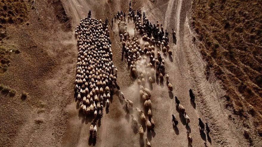 Sürülerin Nemrut Dağı'na yolculuğu başladı