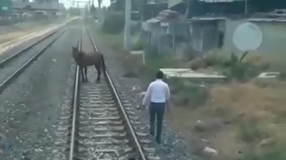 Makinist treni durdurdu, inip ray üzerindeki atı kenara çekti