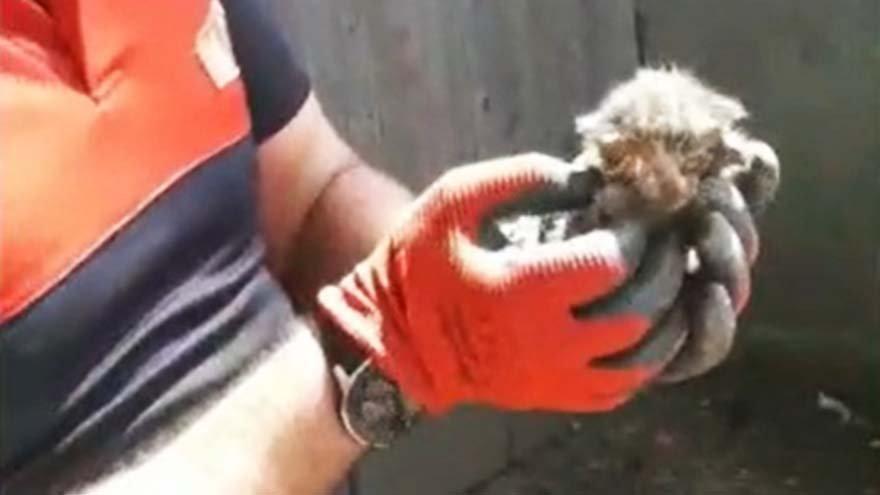 Su borusuna sıkışan kedileri itfaiye kurtardı