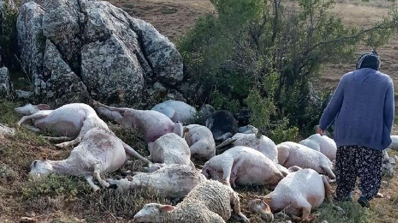 Yıldırım düştü 23 koyun öldü