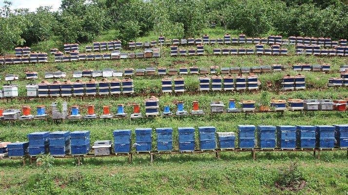 Arı üreticileri için büyük tehlike