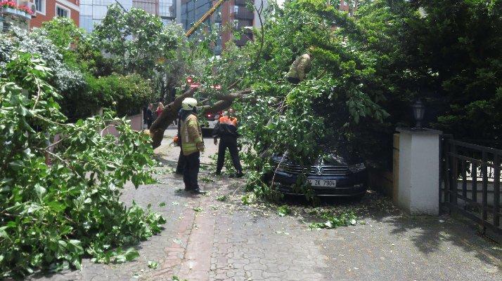 İstanbul'da dut ağacı, otomobilin üzerine devrildi