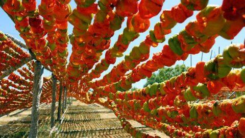 Gastronomi kentinde rengarenk kurutmalık sezonu başladı