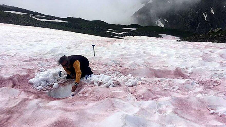 Kırmızı karın gizemi çözüldü: Mikroalgler! İklim değişikliğinin habercisi