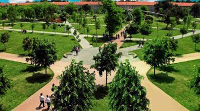 Part-time millet bahçesi