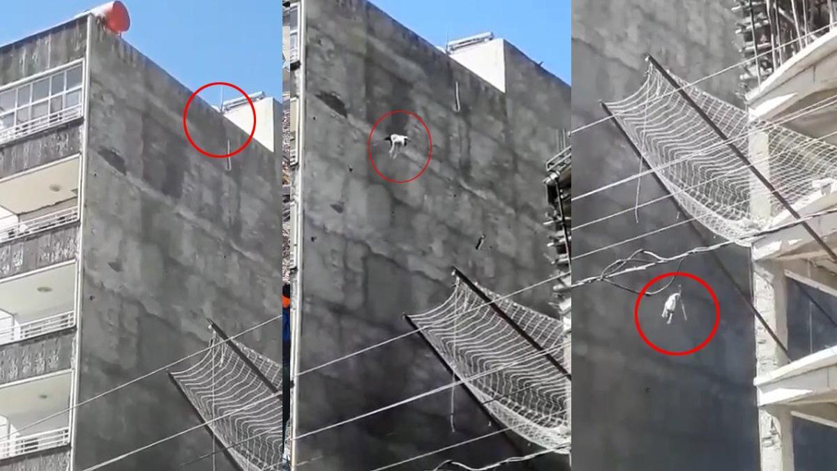 Çatıda mahsur kalan köpek yedinci kattan atladı