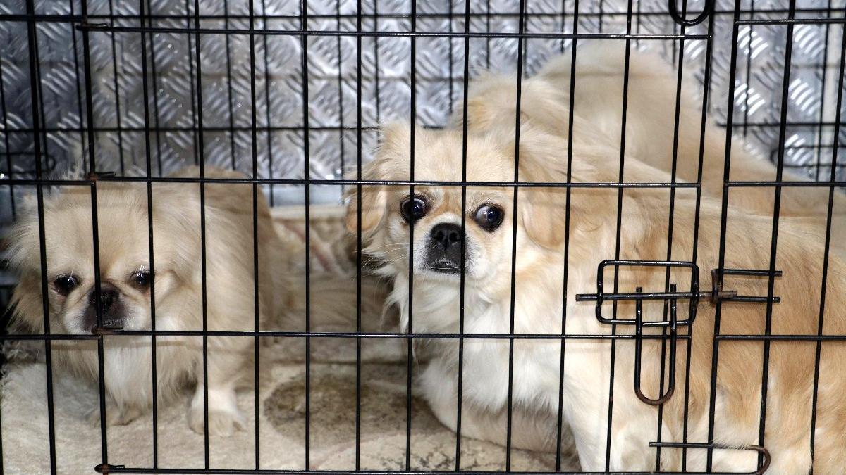 Köpek sevgisi boşanma ve milyonluk davaya neden oldu
