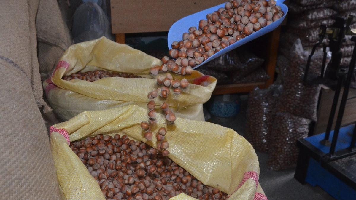 Fındıkta taban fiyat beklentisi en az 30 lira