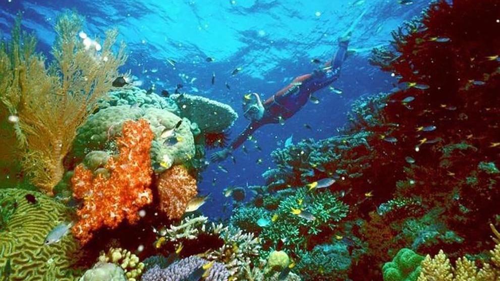 BM'den Büyük Set Resifi'nin tehlike altındaki Dünya Mirası Listesi'ne listesine alınması çağrısı