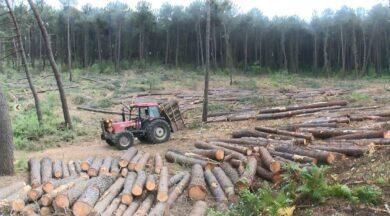 Belgrad Ormanı traşlanıyor