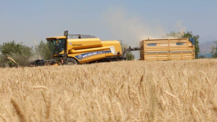 Kuraklık buğdayı vurdu, rekolte yüzde 70 azaldı