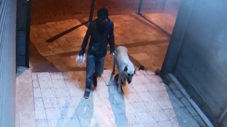 Tüfekli tetikçi, sokak köpeğini öldürüp tecavüz etmiş