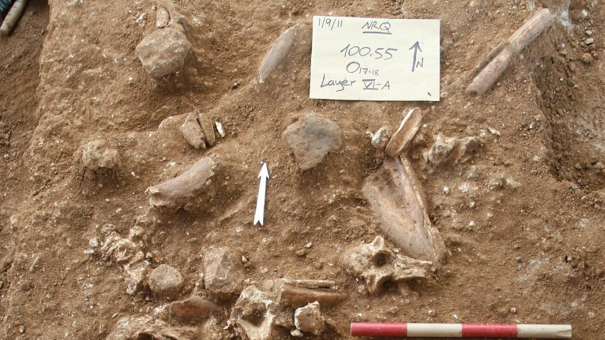 Yeni bir antik insan türü bulundu