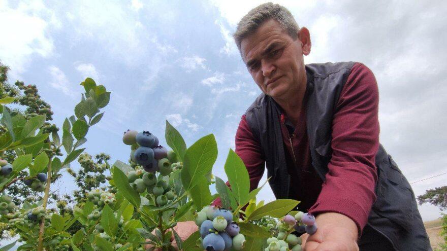 Nadir bulunan meyvenin kilosunu 100 liradan satıyor