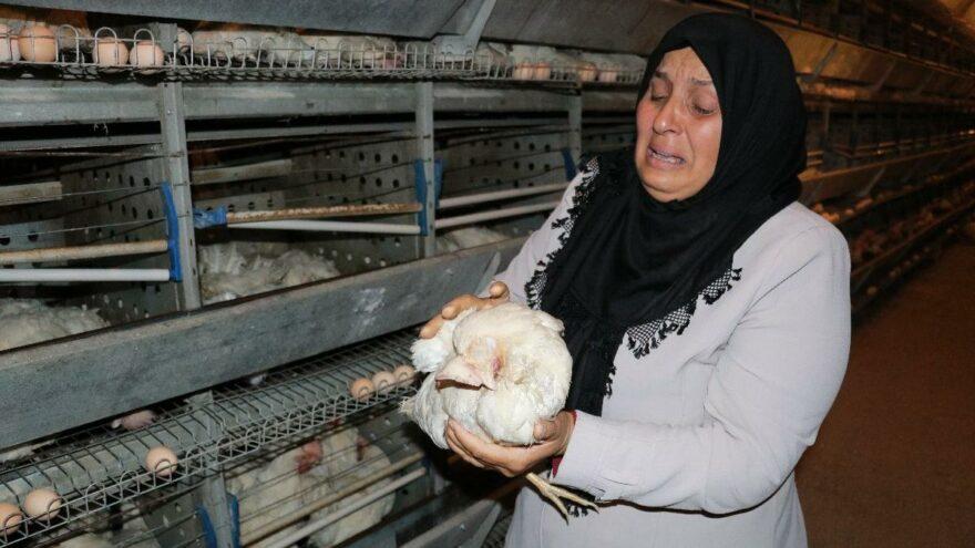 Havasız kalan 10 bin tavuk telef oldu