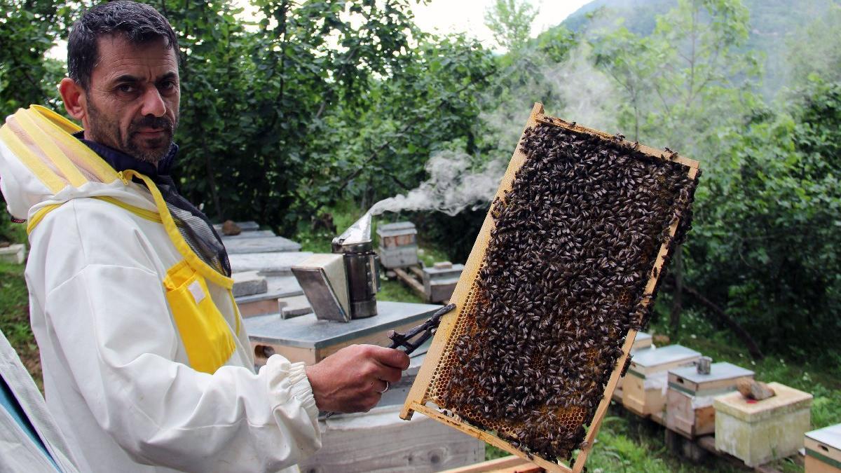 Gal arısı istilası bal üretimini vurdu, rekoltede yüzde 70 düşüş beklentisi