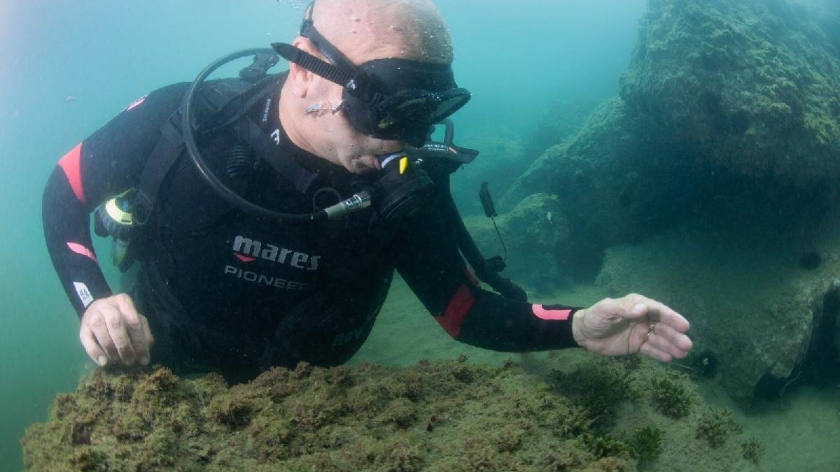 Tunç Soyer denizin dibinde denetledi: Müsilajdan eser yok