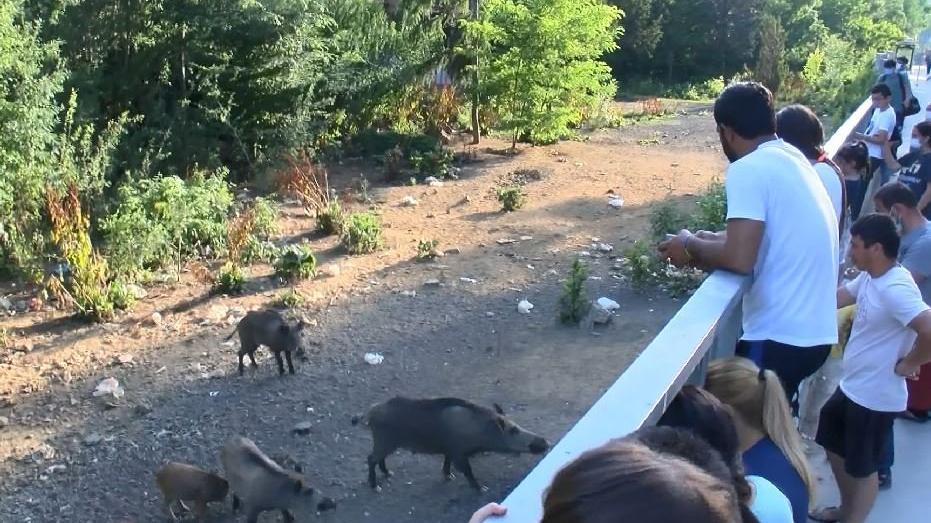 Sarıyer'de 'domuz izleme' tribünü