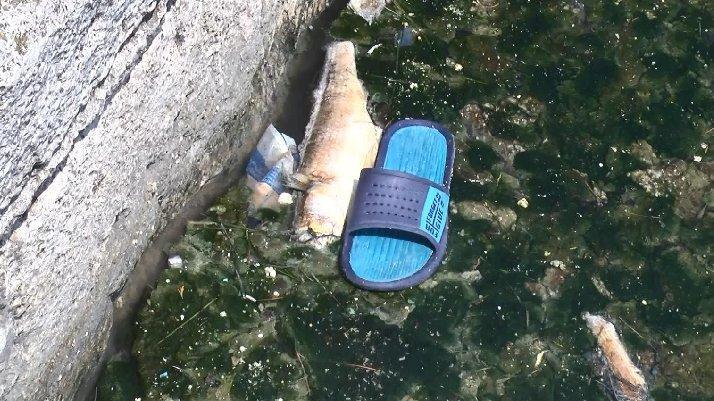Büyükçekmece Gölü'nde balık ölümlerine inceleme...