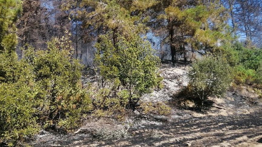 Ceyhan'daki orman yangını 4 hektar alana zarar verdi