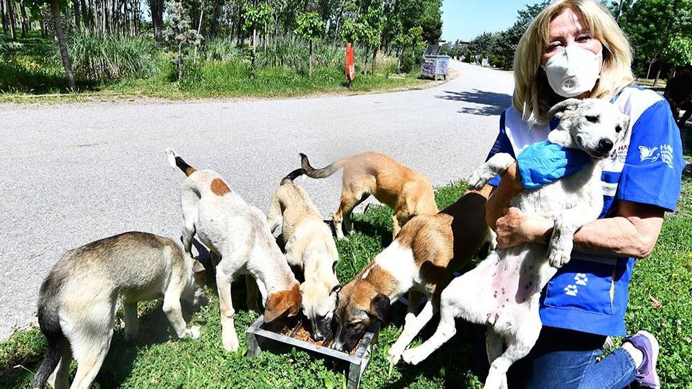 Danıştay'dan sokak köpekleriyle ilgili tazminat kararı