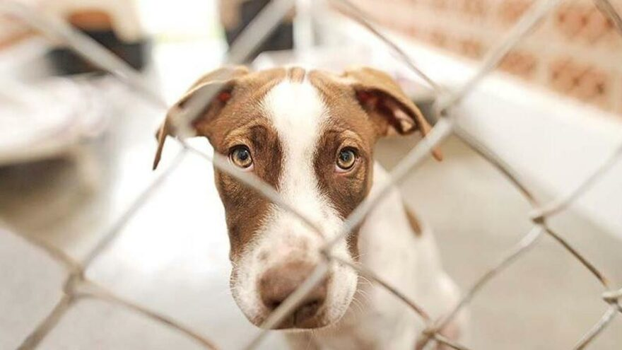 Hayvanları Koruma Kanunu teklifi Meclis'te