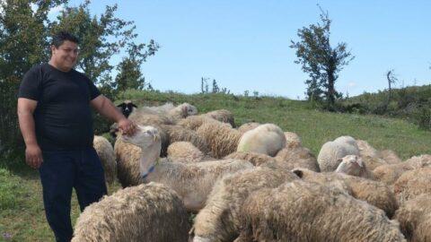 7 bin lira maaşı bıraktı, köyünde çobanlığa başladı