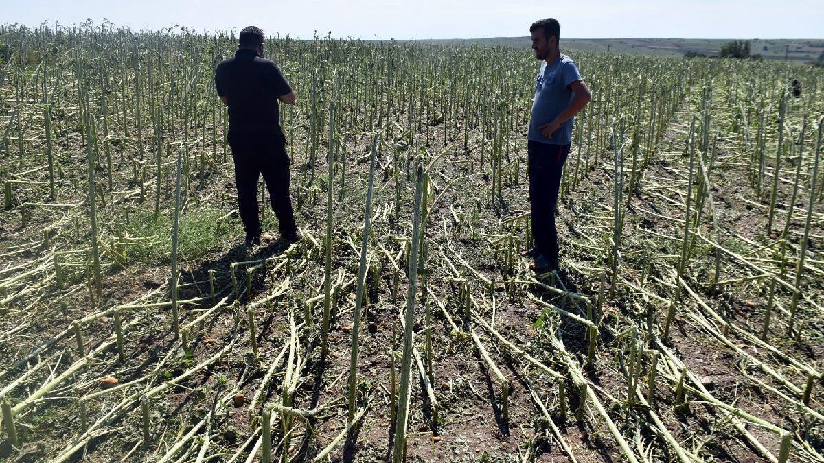 Dolu vurdu olan yine çiftçiye oldu: Zarar büyük