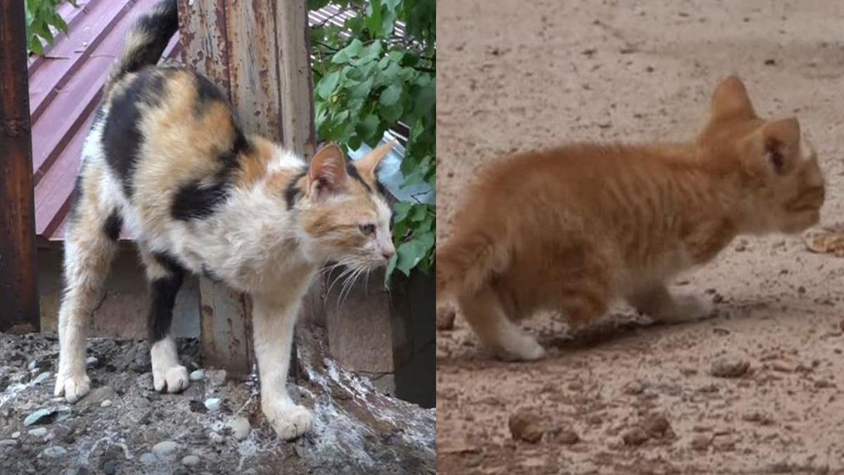 3 ayaklı kedi 2 ayaklı yavru doğurdu