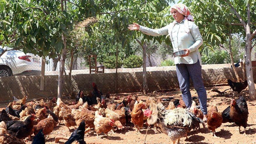 Orman kurmak için tavuklarını satışa çıkardı: Çocuğum olmuyor, dünyaya ağaç bırakmak istedim