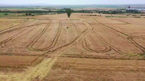 Petrol müjdesi için ekinler yok edildi