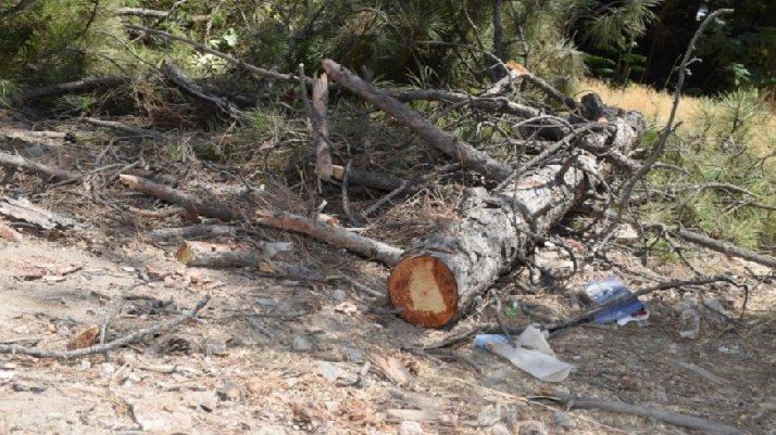 AKP'li belediyeden ağaç katliamı